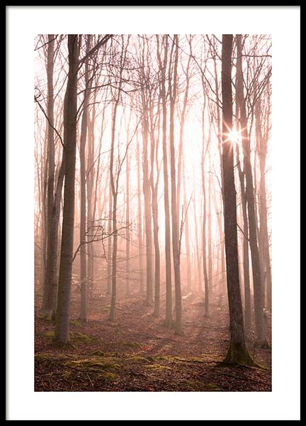Forest in Fog Poster no grupo Posters  / Natureza em Desenio AB (11713)