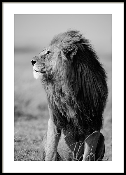 Lion in the Wild Poster no grupo Posters  / Animais em Desenio AB (12304)