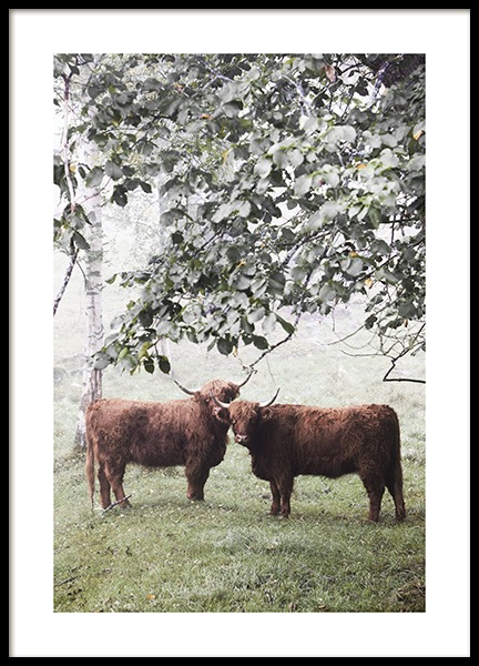 Cows Under Tree Poster no grupo Posters  / Animais em Desenio AB (13514)