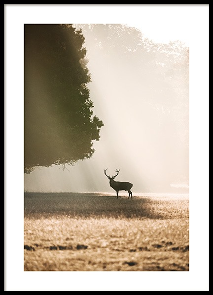 Red Deer in the Sunlight Poster no grupo Posters  / Animais em Desenio AB (13517)