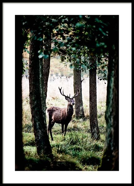 Stag In Forest Poster no grupo Posters  / Natureza em Desenio AB (2743)