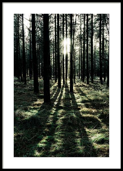 Sunlight In Forest Poster no grupo Posters  / Natureza em Desenio AB (2744)