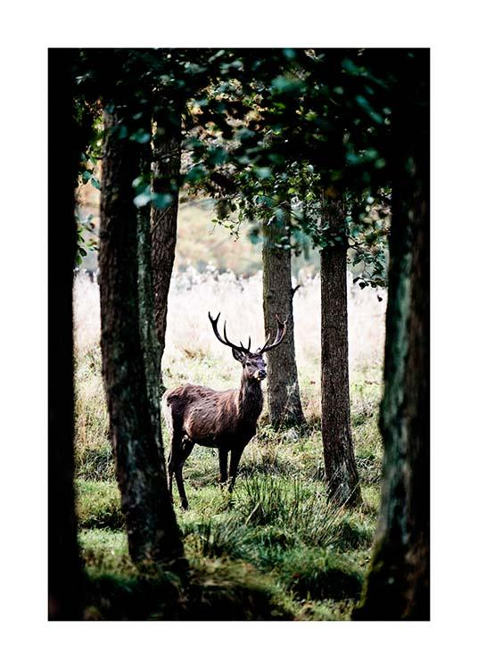 Stag In Forest Poster / Natureza em Desenio AB (2743)