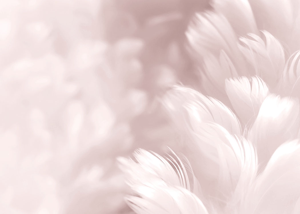 Fluffy Pink Feathers Poster / Arte fotográfica em Desenio AB (8512)